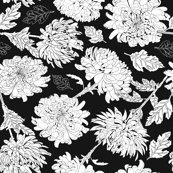 Rchrysantemumblackbg_shop_thumb