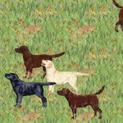 Rrlabrador-retrievers-eager-for-a-day-in-the-field_shop_thumb