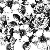 Rrblack_and_white_floral_shop_thumb