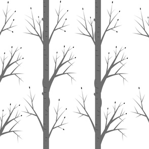 Grey Forrest