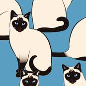 Siamese Cats BIG Colofrul on Blue