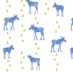Moose and tracks