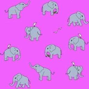elephants grey pink