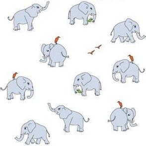 elephants light grey