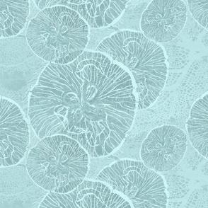 _1 moon jellies on shoal