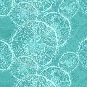 _1 moon jellies on lagoon