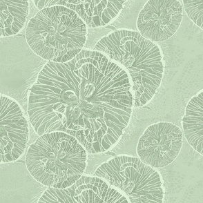 _1 moon jellies on wavelet
