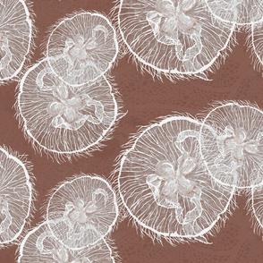 cavao moon jellies