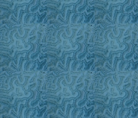 Rrbrain-coral-blue_contest226840preview