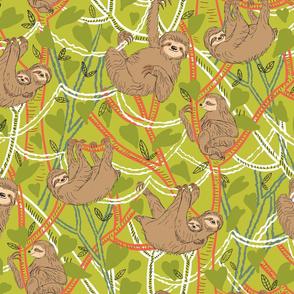 Brown Sloths