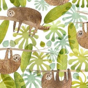 sleepy sloths in the rainforest