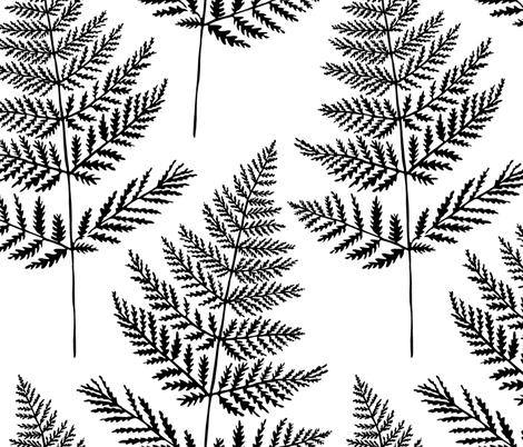 Jumbo Black&White Fern fabric by jillcookdesigns on Spoonflower - custom fabric