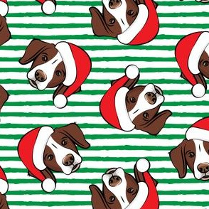 Christmas Brittanys (liver) - green stripes