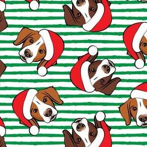 Christmas Brittanys (liver & orange) - green stripes