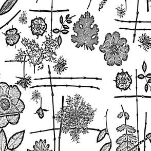 Black and White Anemone Garden
