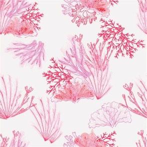 Coral Ocean in Pink
