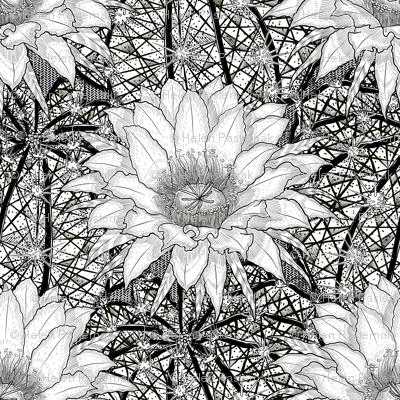 Black & White Geo Cactus Echinopsis