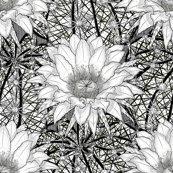 Rrblack-white-geo-cactus-echinopsis_shop_thumb