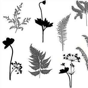 Black and White Fern Garden sm