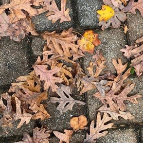 OAK LEAVES ON PAVERS-LARGE-MIRROR