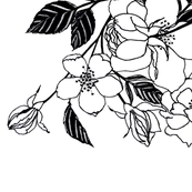 black-and-white-roses-wallpaper-large-Spoonflower-FINAL
