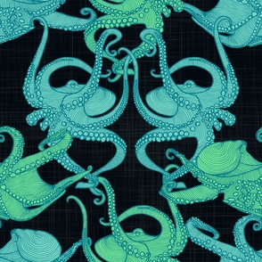 Cephalopod - Octopi smaller - Night swim