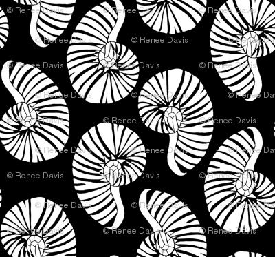 White Nautilus on Black