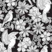 Bright Birds on Black