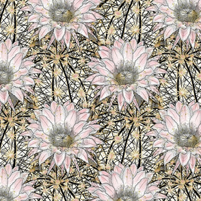 "Art-deco Cactus Echinopsis 11"""