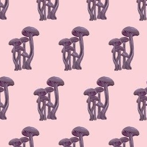 Laccaria Mushrooms