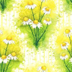 Camomile Blossom