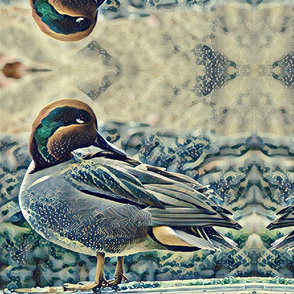 Teal duck reflected