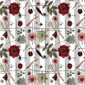 Red anemone stripe sm