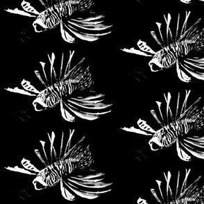 Undersea - Fish in B & W
