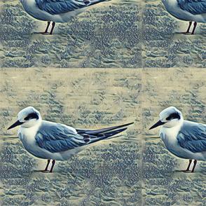 Single Tern