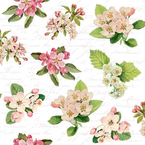Vintage Blossoms on white