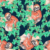 sloths and tropical  vines