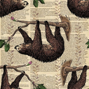 Sloths for Study