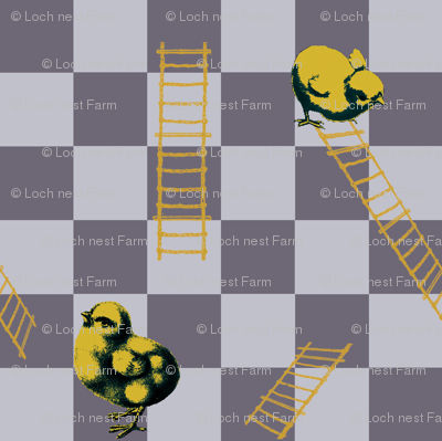 Chooks and Ladders | Bee Dance