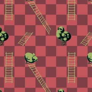 Chooks and Ladders   Cider Apple