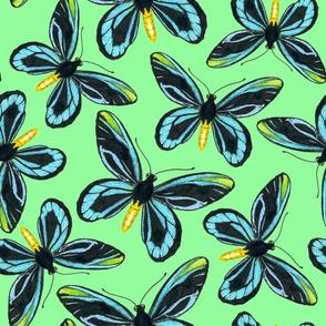 Birdwing butterfly pattern