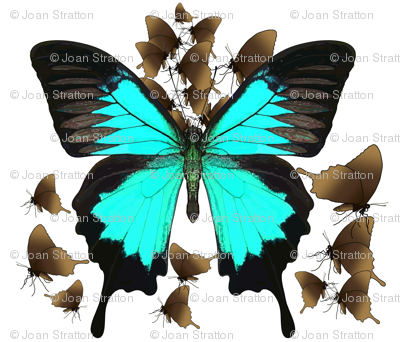 Ulysses Butterfly4 - material design