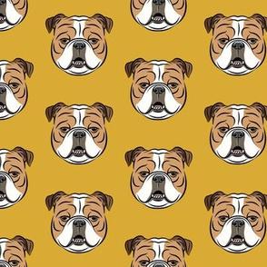 Bulldogs - Gold -British bulldog English Bulldog Dog Breed