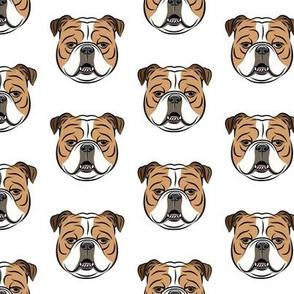 Bulldogs - White -British bulldog English Bulldog Dog Breed