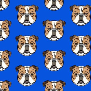 Bulldogs - Blue -British bulldog English Bulldog Dog Breed