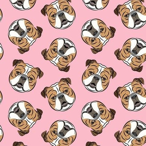 Bulldogs - Toss on Pink - British bulldog English Bulldog Dog Breed