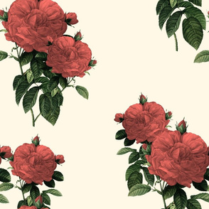 Redoute Rose ~ Coral Reef on Cosmic Latte