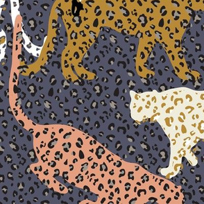 africa africa - leopards - blue