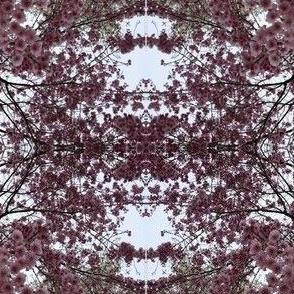 Sakura Cascade