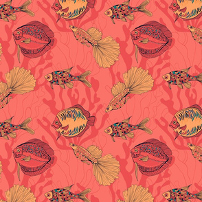 Fishes on living coral background